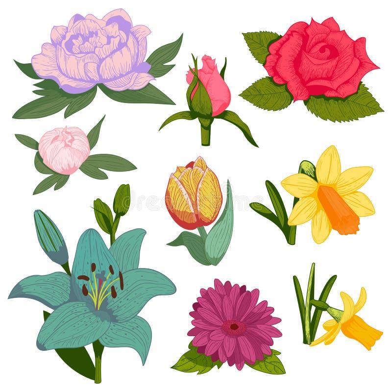 A flor botânica da flor feito a mão bonita do vetor da aquarela que pinta o verão feito à mão floresce a decoração da pétala do r ilustração stock