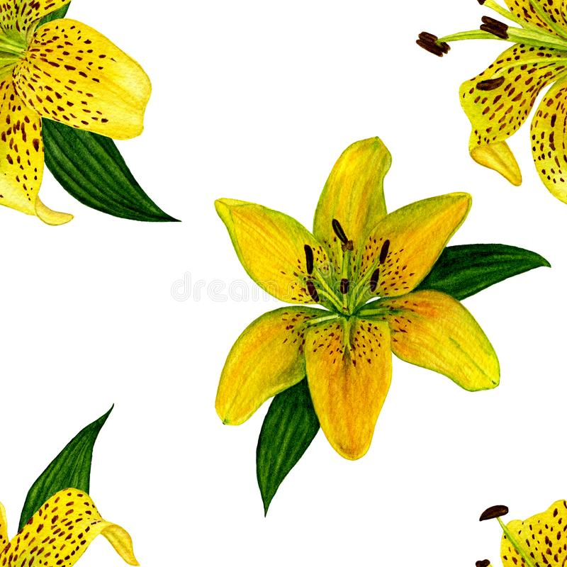 Flor botânica da flor Teste padrão sem emenda Lírios amarelos do watercolour Aperfeiçoe para fundos, texturas, papel de envolvime ilustração do vetor