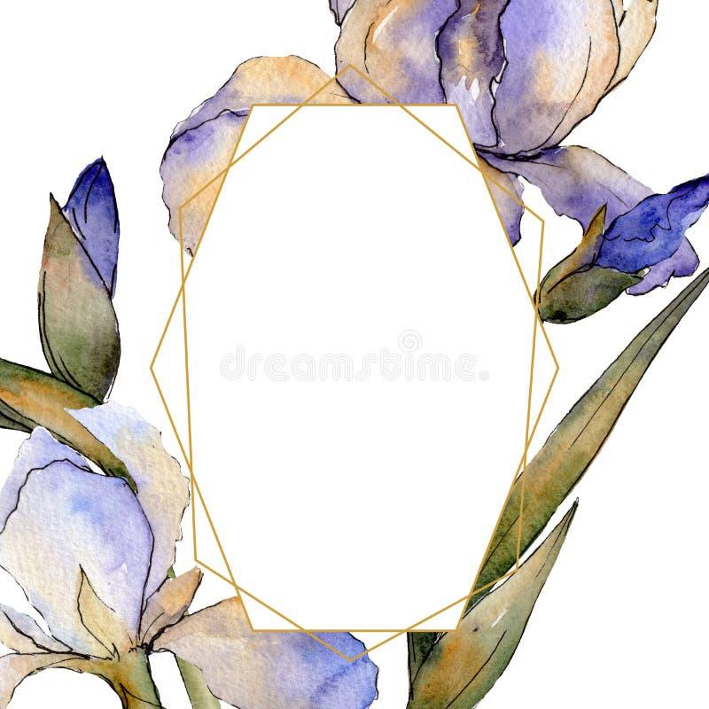 Flor botânica floral da íris roxa Grupo da ilustração do fundo da aquarela Quadrado do ornamento da beira do quadro ilustração stock