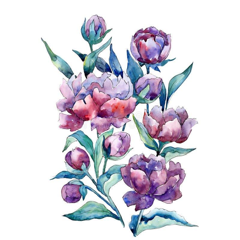 Flor botânica floral do ramalhete roxo da peônia Jogo do fundo da aguarela Elemento isolado da ilustração das peônias ilustração do vetor