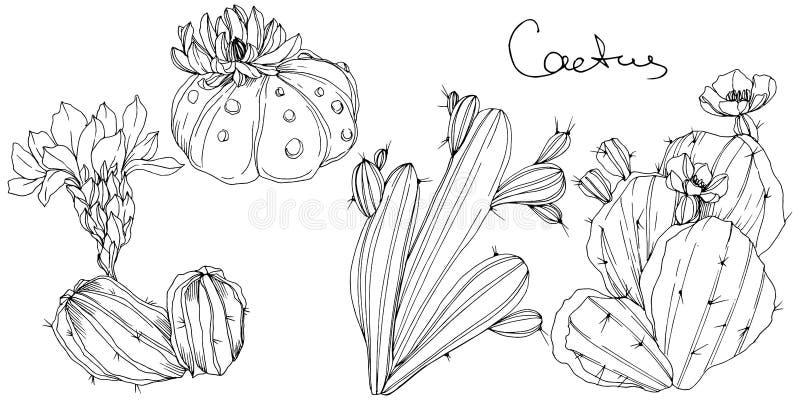 Flor botânica floral dos cactos do vetor Arte gravada preto e branco da tinta Elemento isolado da ilustração dos cactos ilustração stock