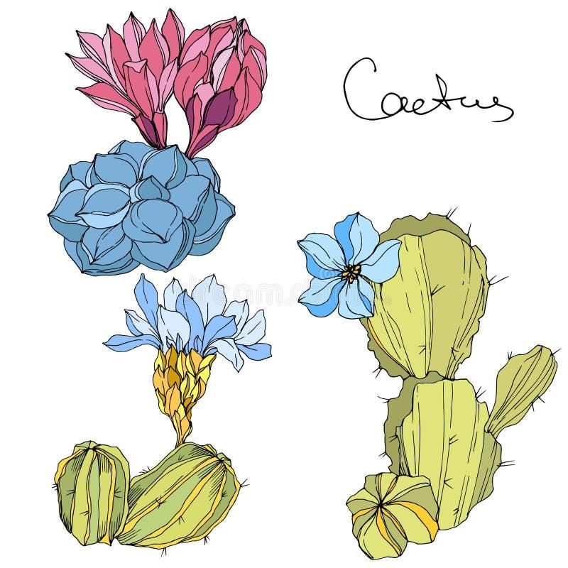 Flor botânica floral dos cactos do vetor Arte gravada verde e azul da tinta Elemento isolado da ilustração dos cactos ilustração royalty free