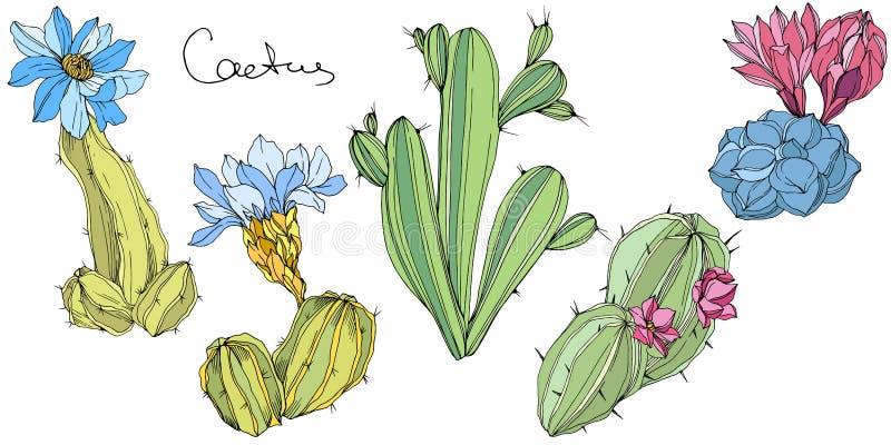 Flor botânica floral dos cactos do vetor Arte gravada verde e azul da tinta Elemento isolado da ilustração dos cactos ilustração do vetor