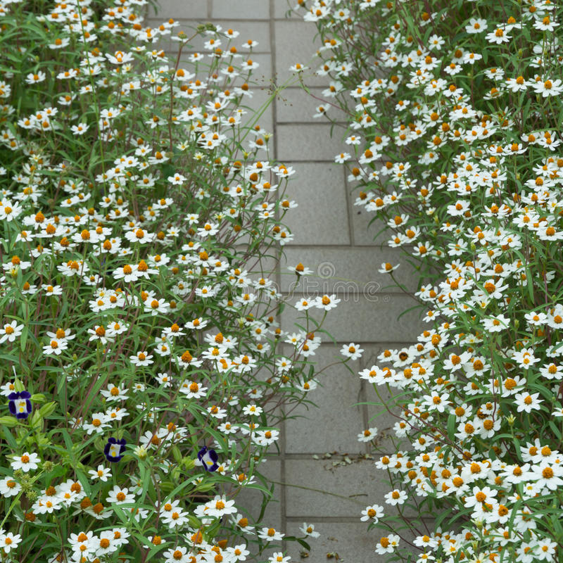 Download Flor branca imagem de stock. Imagem de floral, postcard - 26523815