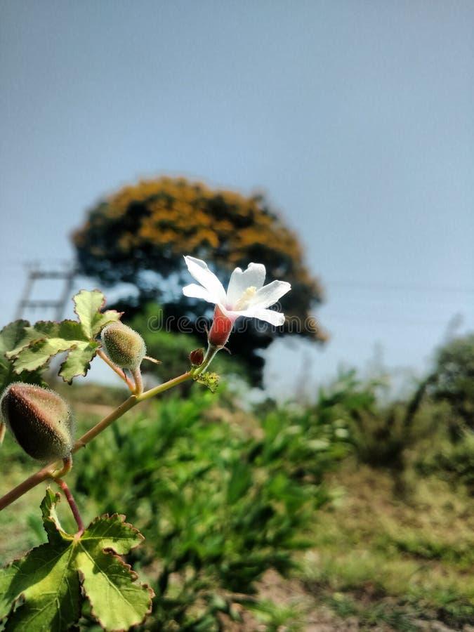 Flor branca bonita foto de stock
