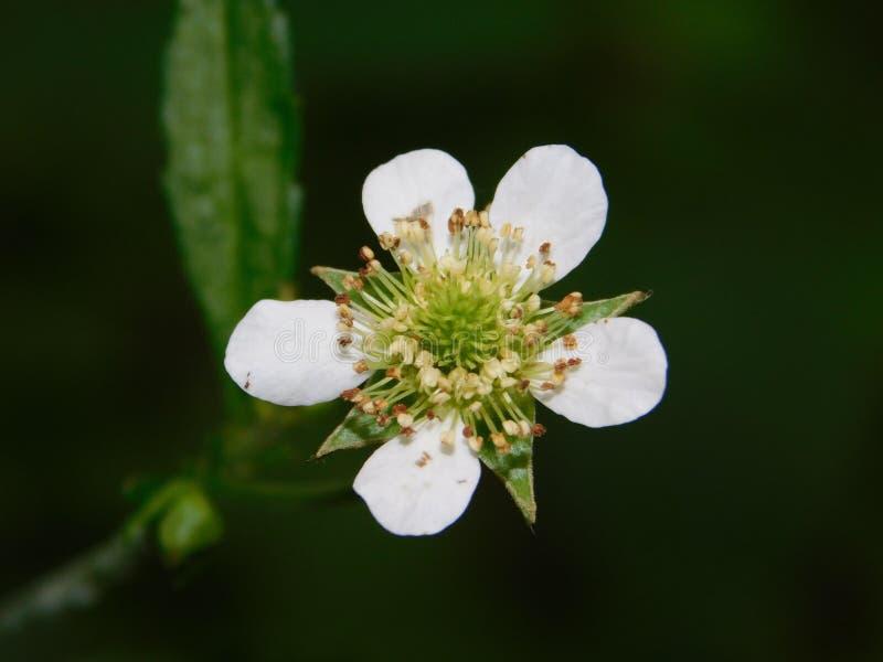 Flor branca bonita com fundo verde fotografia de stock