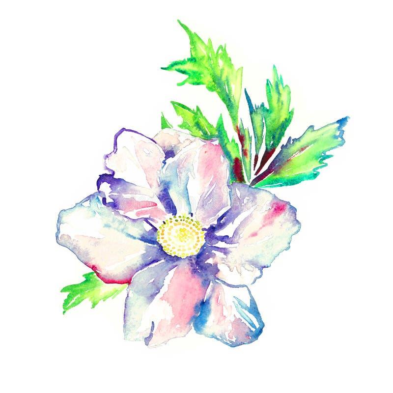 Flor branca com folhas verdes, elemento pintado à mão isolado da peônia do projeto da ilustração da aquarela ilustração stock