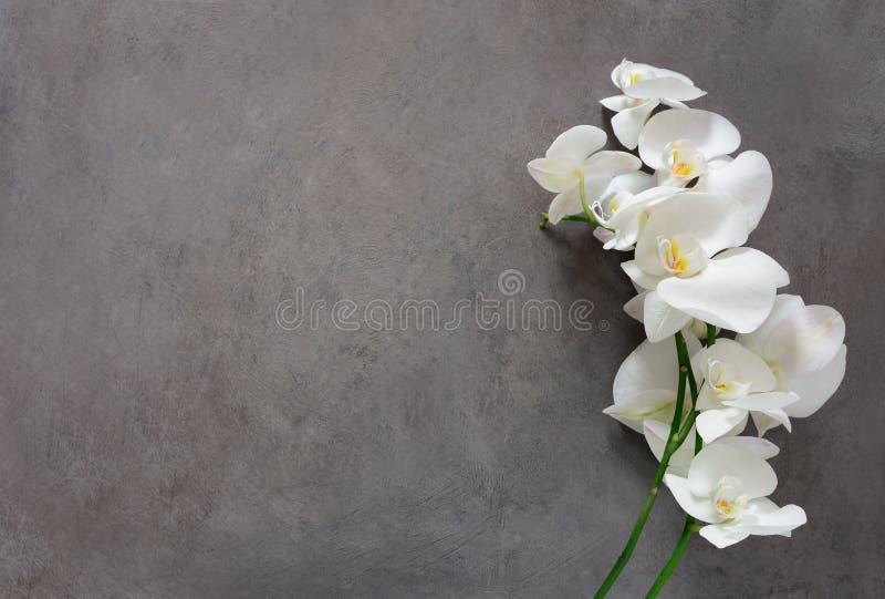 Flor branca da orquídea na flor fotos de stock royalty free