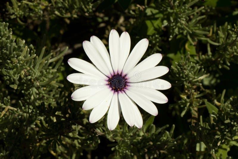 Flor branca de solo foto de stock