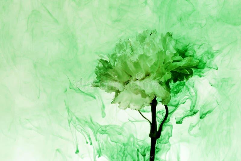 A flor branca dentro das flores verdes do fundo da ?gua sob pinturas fuma o UFO do cravo do borr?o do vapor imagem de stock