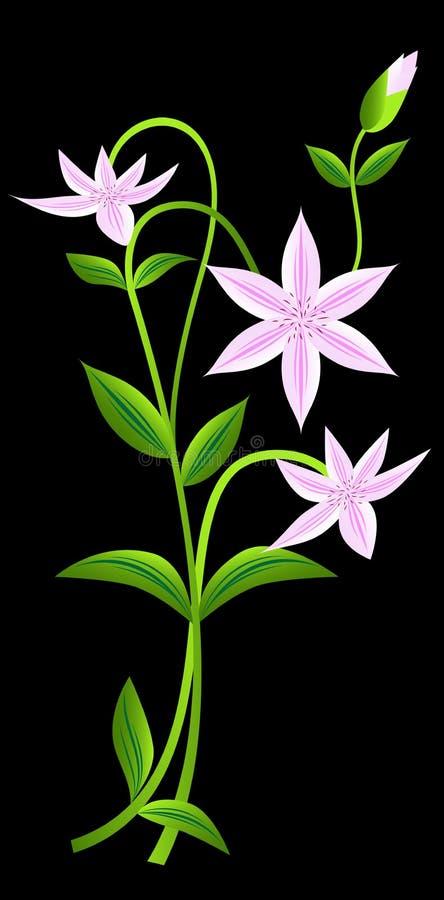 Flor branca do clematis ilustração do vetor