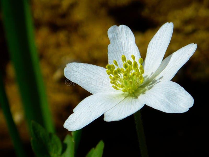 Flor branca e verde em fotografia picada em macro foto de stock royalty free