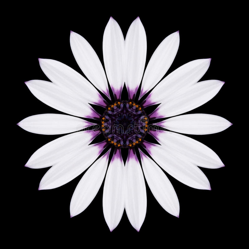 Flor branca Mandala Kaleidoscope Isolated no preto imagens de stock royalty free
