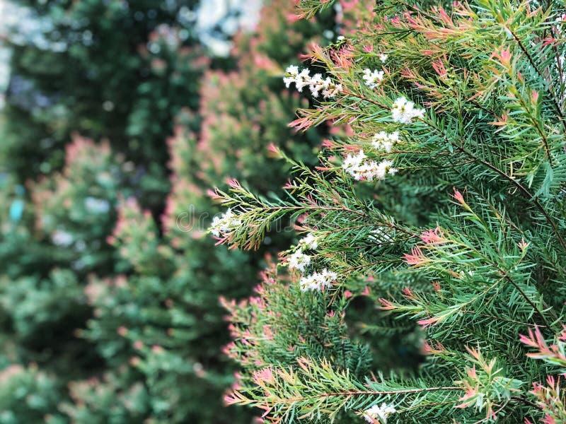 Flor branca na árvore Bonito de natural imagem de stock royalty free