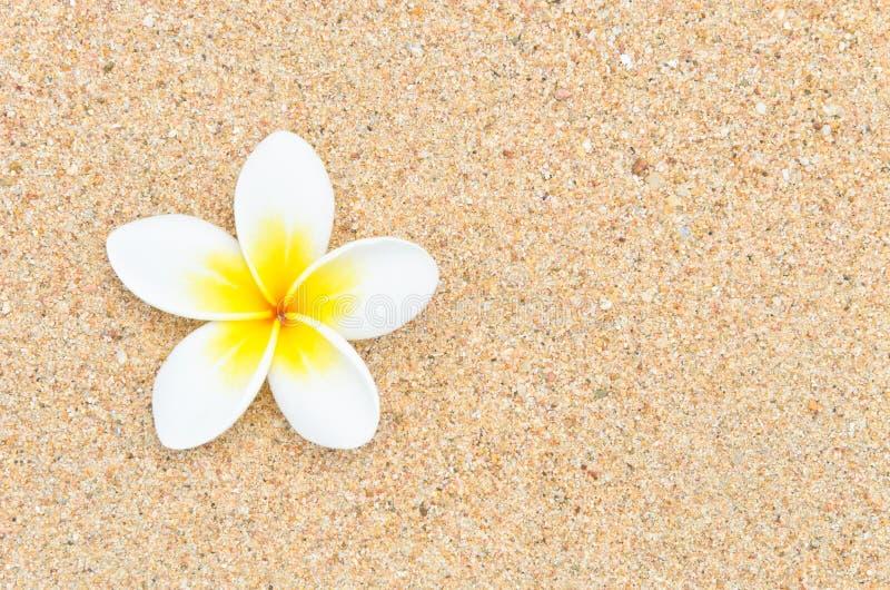 Flor branca na praia da areia fotos de stock
