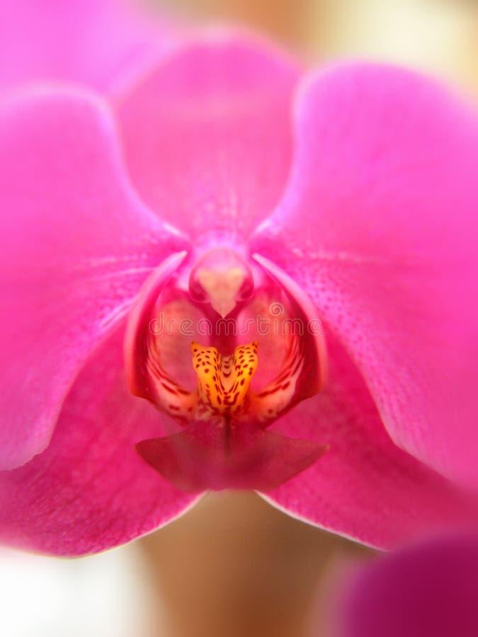 Flor brilhante da orquídea