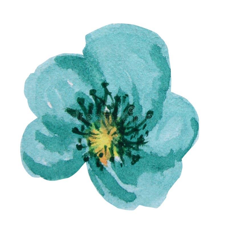 Flor brillante hermosa de la acuarela de la turquesa Aislado en el fondo blanco libre illustration