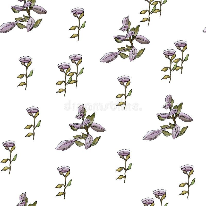 Flor Bud Lily Violet ilustração do vetor