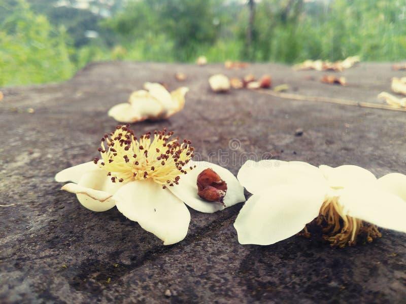 Flor caida foto de archivo