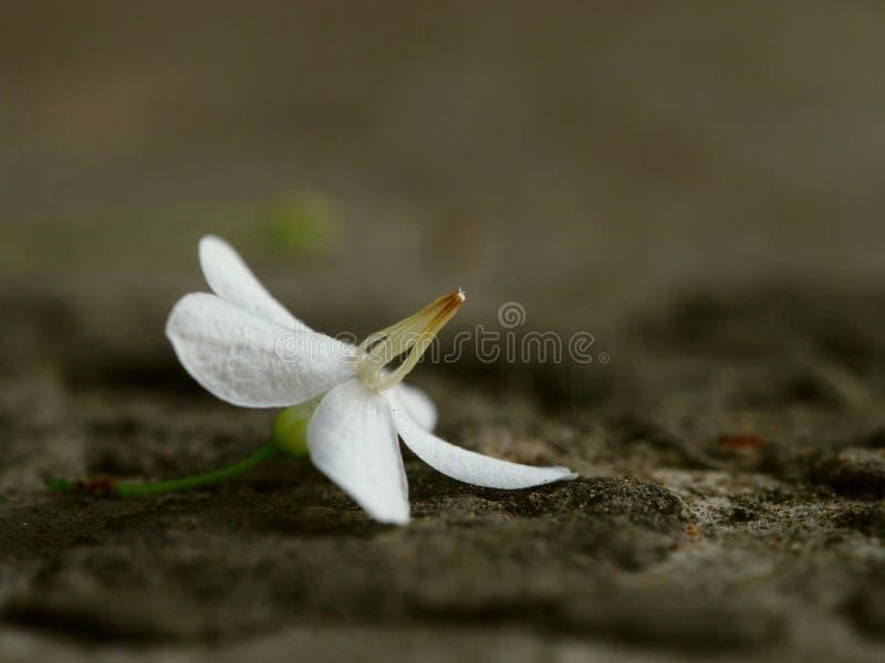 Flor caida fotos de archivo