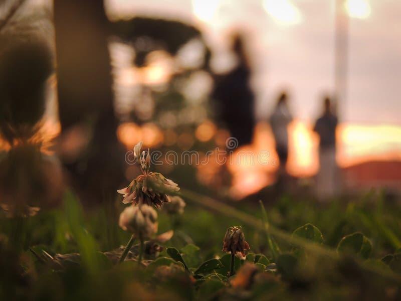 Flor cerca de un campo de césped imágenes de archivo libres de regalías