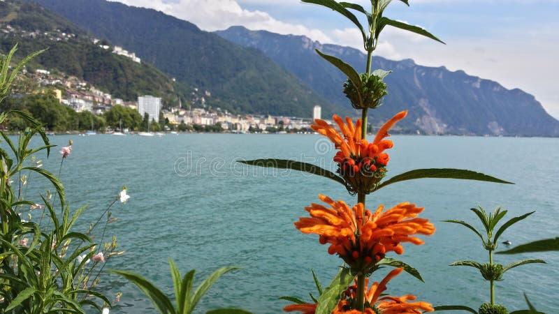 Flor cerca del lago foto de archivo