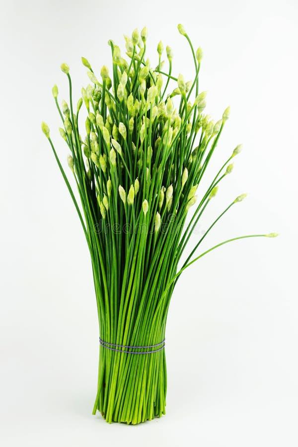 Flor china de la cebolleta o de las cebolletas aislada imágenes de archivo libres de regalías