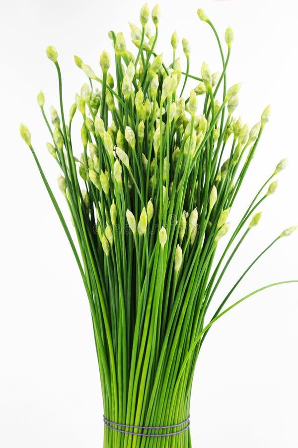 Flor china de la cebolleta o de las cebolletas aislada foto de archivo libre de regalías