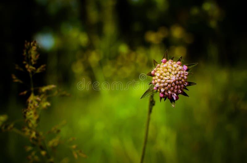 Flor clara do campo foto de stock