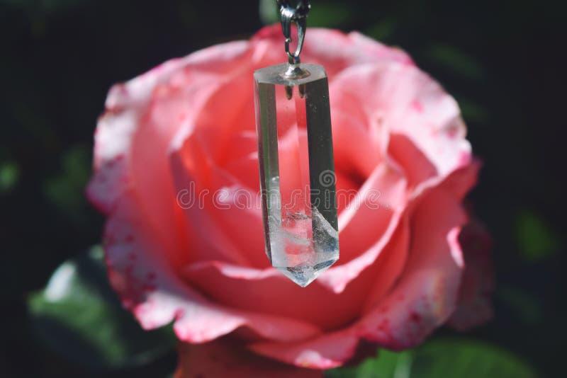 Flor color de rosa coralina en jard?n de rosas Visi?n superior fotos de archivo
