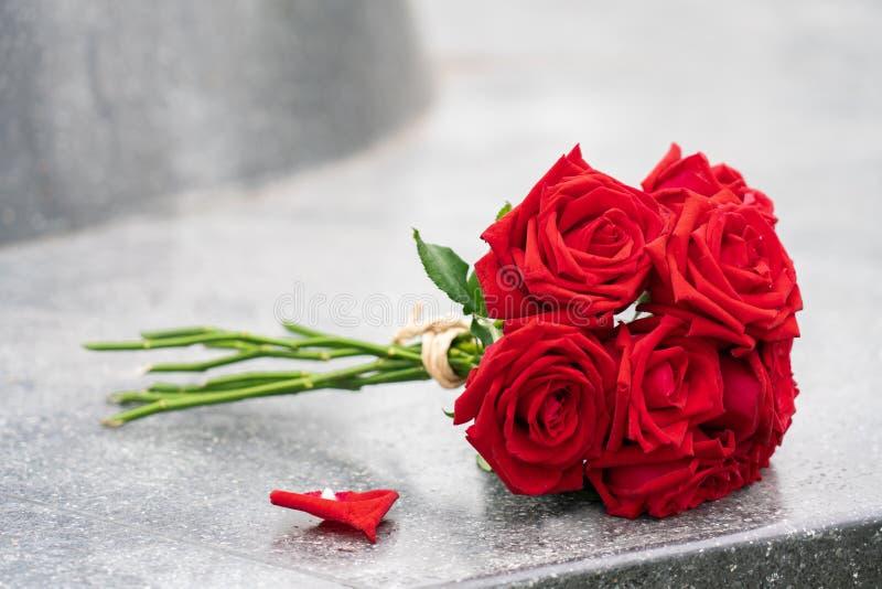 Flor color de rosa del rojo en el fondo blanco imágenes de archivo libres de regalías