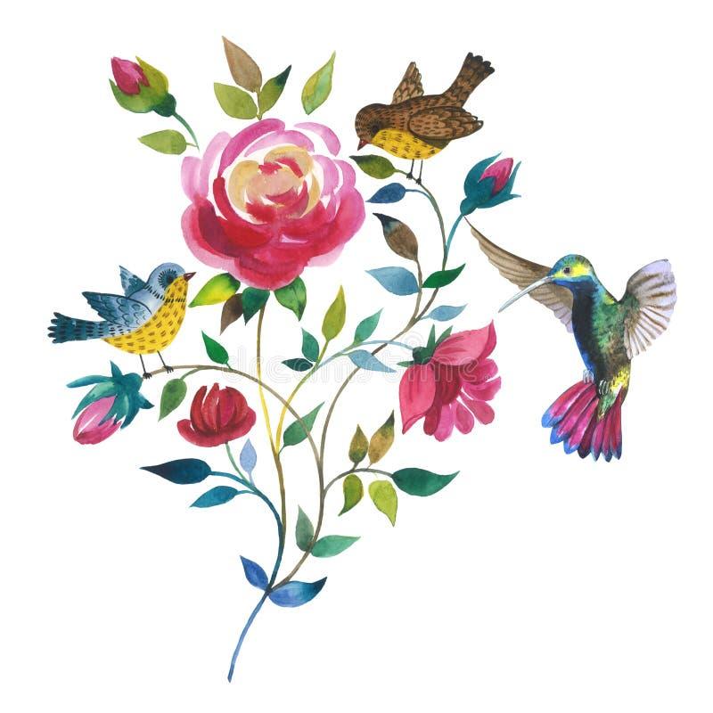 Flor color de rosa del Wildflower con colibri del pájaro en un estilo de la acuarela aislada stock de ilustración