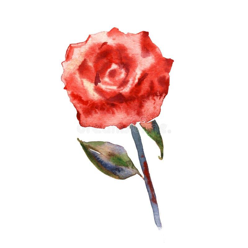 Flor color de rosa del Wildflower en un estilo de la acuarela aislada Nombre completo de la planta: subi?, el hulthemia, Rosa Acu libre illustration