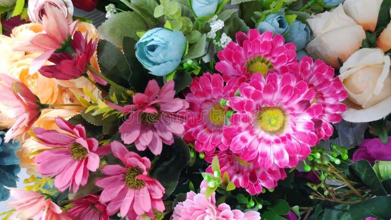 Flor colorida imagem de stock royalty free