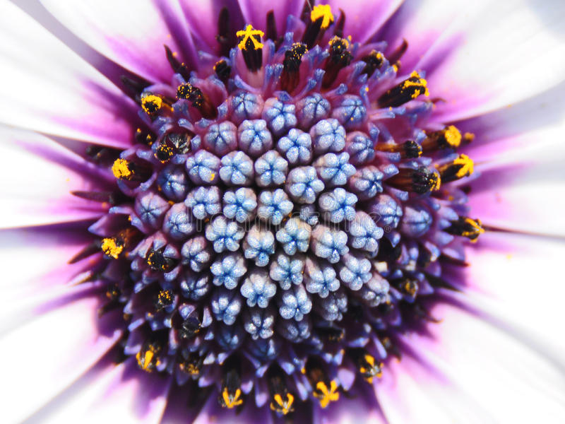 Flor colorida fotografía de archivo libre de regalías