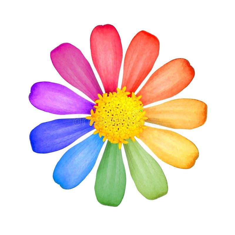 Flor colorida aislada en el fondo blanco Flor hermoso con polen amarillo imagen de archivo