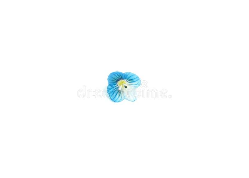 Flor colorida azul aislada en el fondo blanco Visi?n superior, endecha plana ci?rrese encima de fotograf?a stock de ilustración