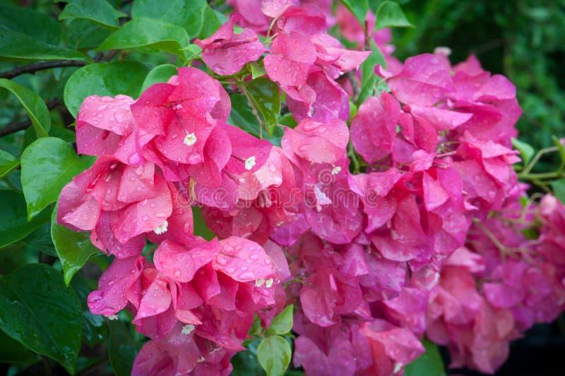 Flor colorida con agua del descenso fotos de archivo