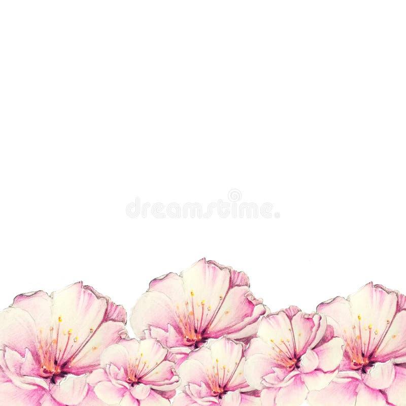 Flor colorida de sakura foto de stock royalty free