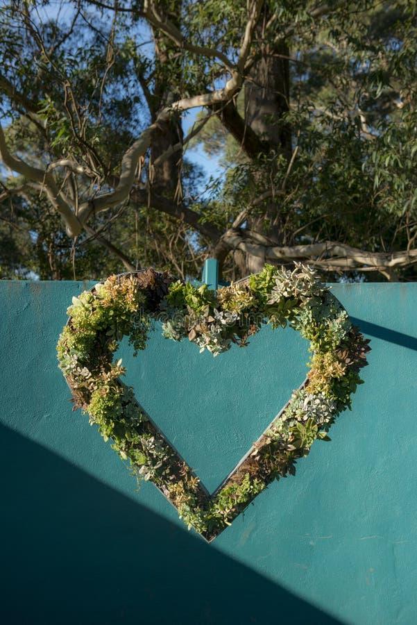 Flor colorida del corazón en jardín fotos de archivo libres de regalías