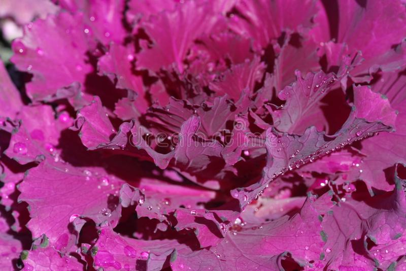 flor colorida en el norte de Tailandia foto de archivo