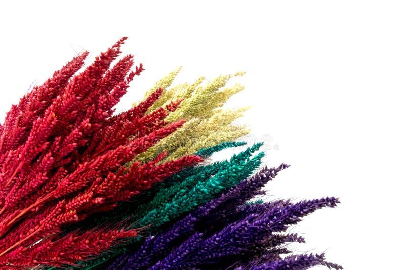 Flor colorida en los fondos de madera fotografía de archivo libre de regalías