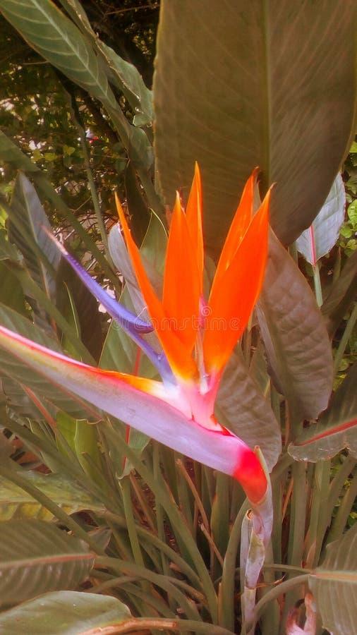 Flor colorida especial fotos de archivo