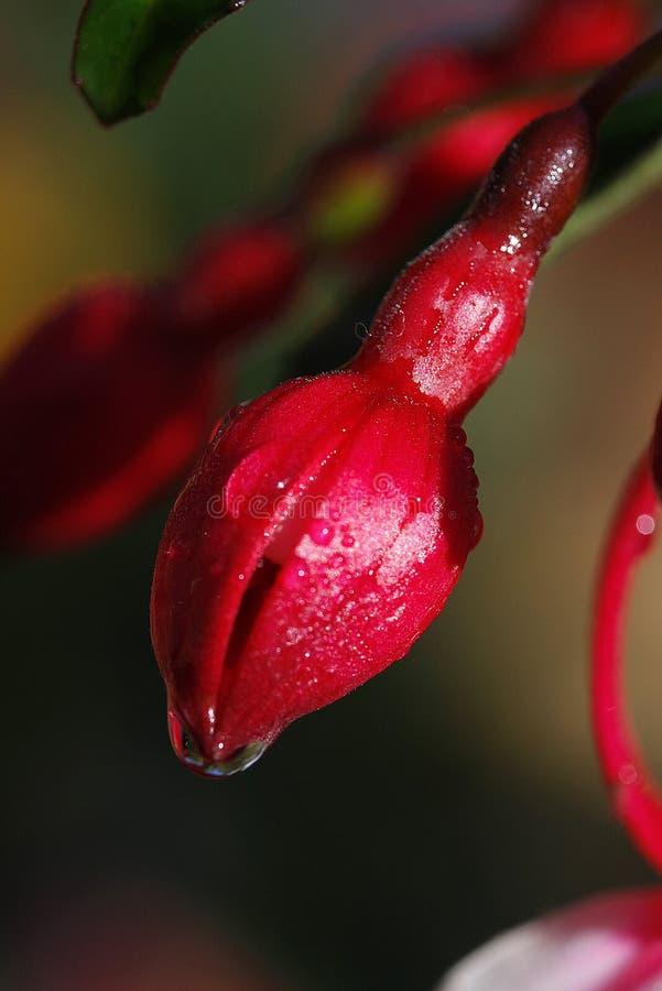 flor colorida no norte de Tailândia imagem de stock royalty free