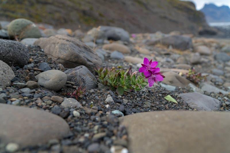A flor colorida pequena está crescendo na superfície áspera fotografia de stock