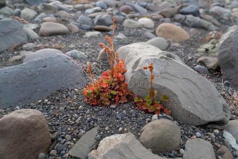 A flor colorida pequena está crescendo na superfície áspera imagem de stock royalty free