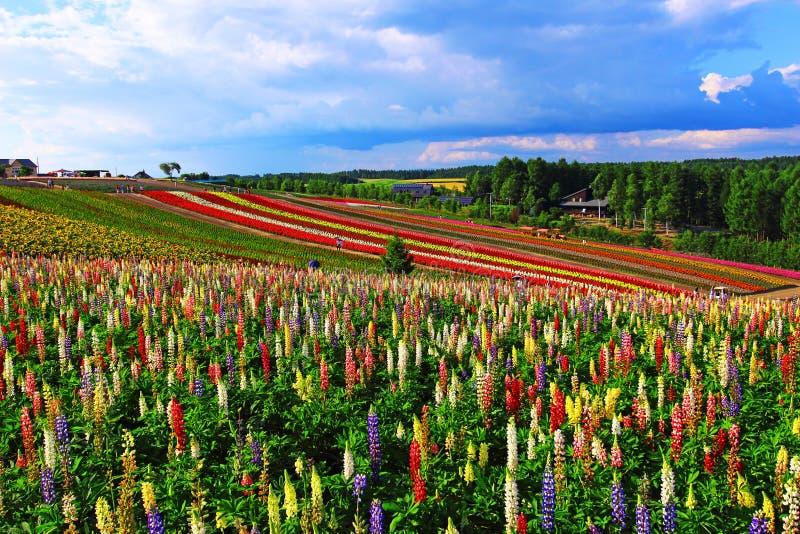 Download Flor colorida y cielo azul foto de archivo. Imagen de holiday - 44852918