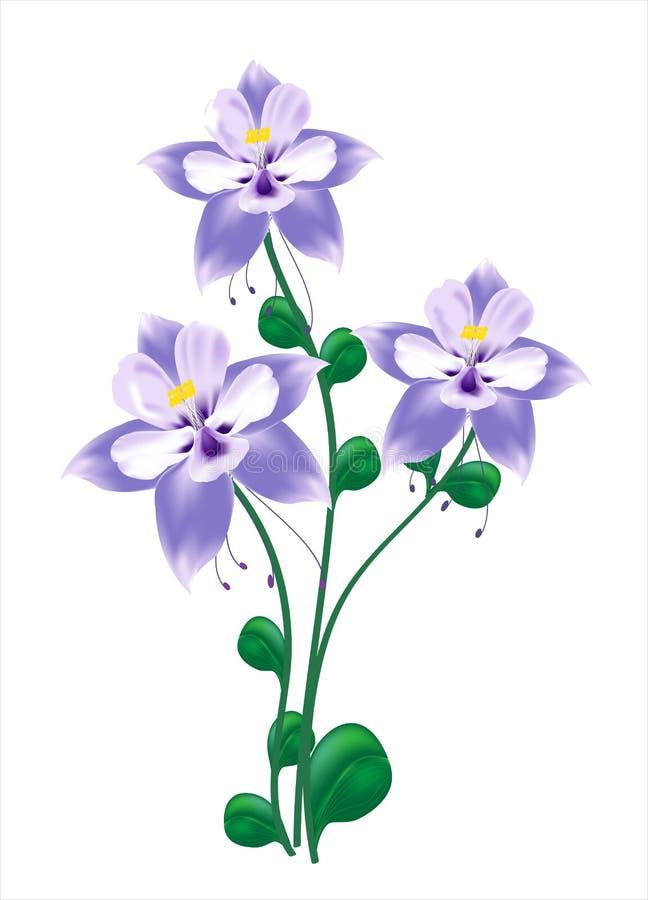 Flor columbine azul ilustração stock