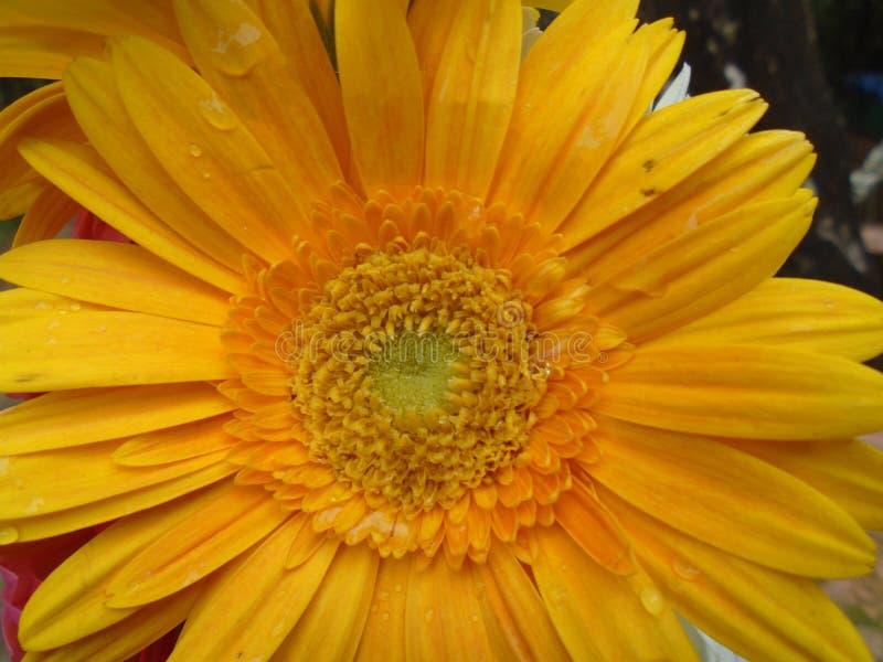 Flor com beautifullflower da gota da água imagem de stock