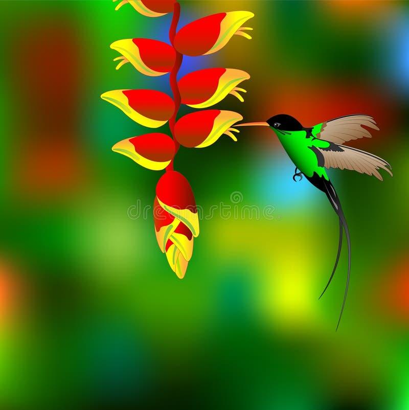 Flor com colibri. ilustração stock